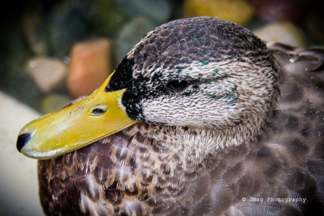 September 14, 2013 - Duck