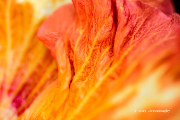 September 15, 2013 _ flower petal_